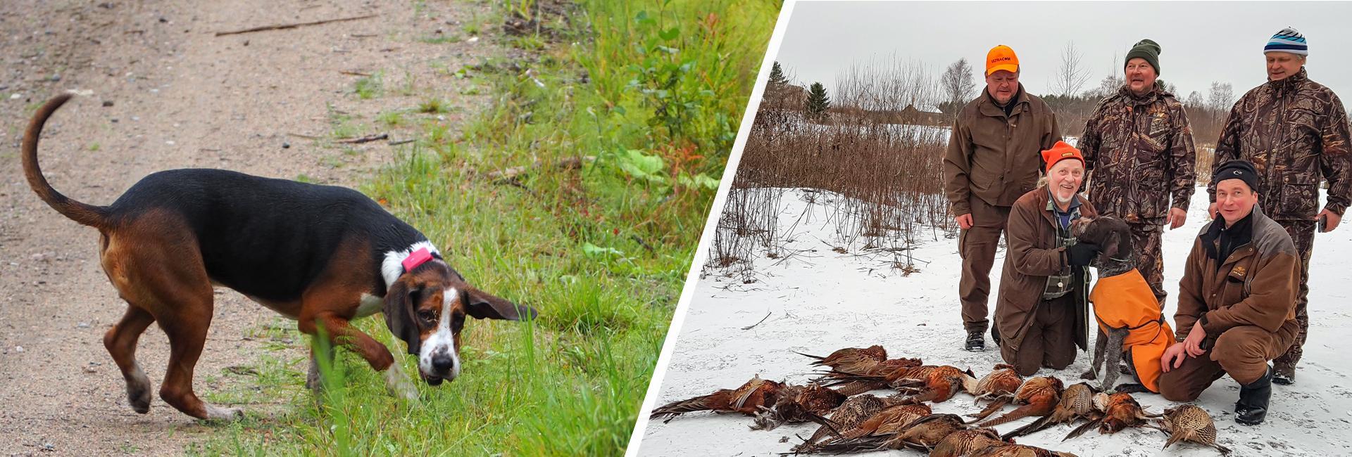 Erätaika-messujen takana työskentelee kaksi koirajärjestöä